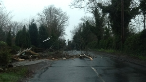 Falling trees in south county Dublin
