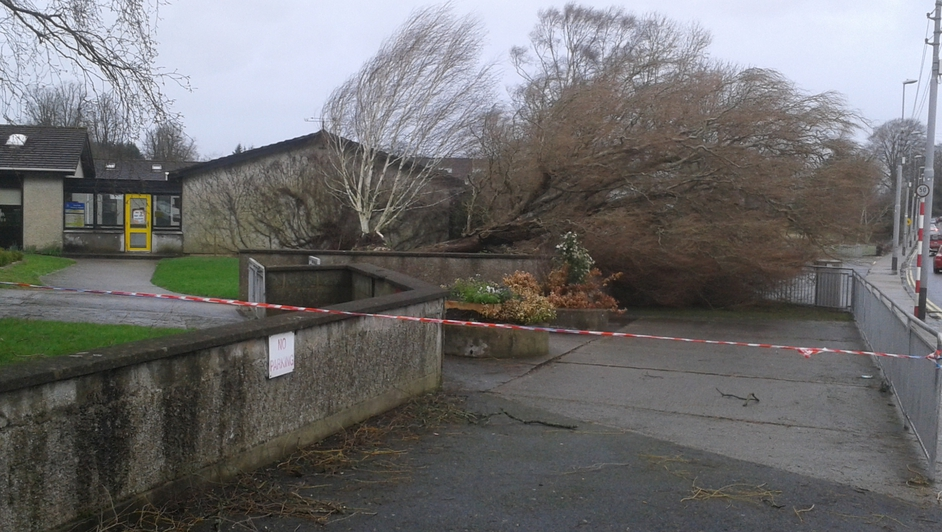 This tree fell at the entrance to Scoil Ide in Corbally, Co Limerick (Pic: Niall South)