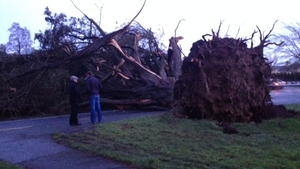 A huge tree felled by high winds on Block Road in Portlaoise, Co Laois (Pic: Clare Kelly)