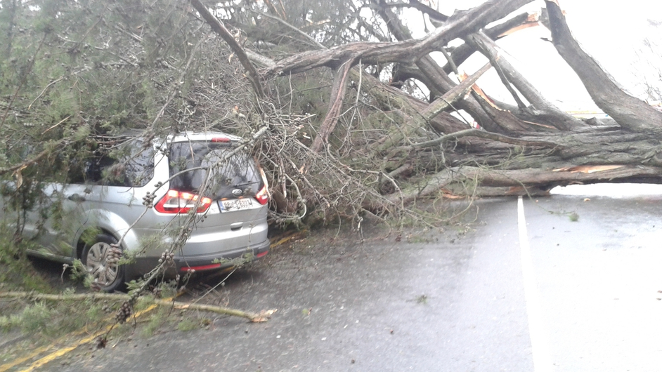 A family had a lucky escape after the tree fell on their car in Portlaoise (Pic: David McCall)