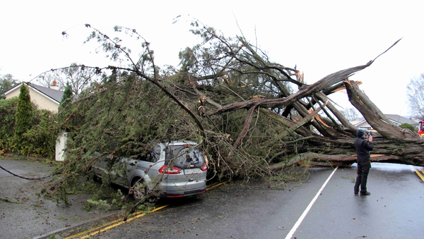 A family had a lucky escape after this tree came down on their car on the Block Road in Portlaoise (Pic: David McCall)