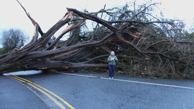 A tree across a road in Portlaoise (Pic: Tim Keane)