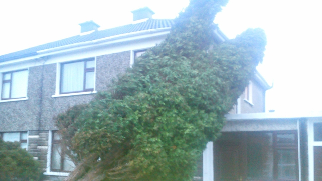 A tree hit a house in Leixlip (Pic: Mairtin Mac Cormaic)