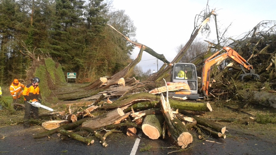 A tree is cleared from a road in Portlaoise, Co Laois