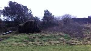 Trees uprooted in Co Kerry (Pic: Stephen Daly)