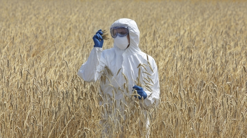 Environmentalists worry that the changes will end up increasing the amount of GMO crops being grown in Europe