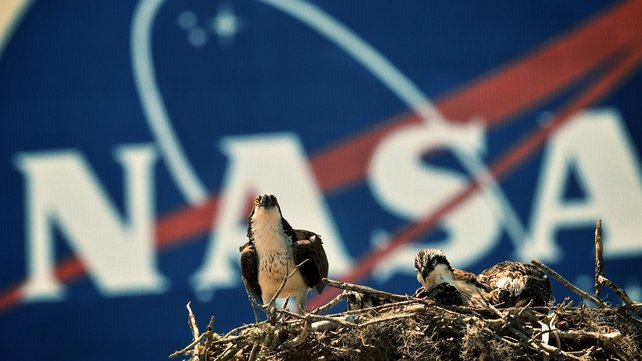 An Osprey eagle with three eaglets sits on their nest in front of the NASA logo on the Vehicle Assembly Building at the John F Kennedy Space Center