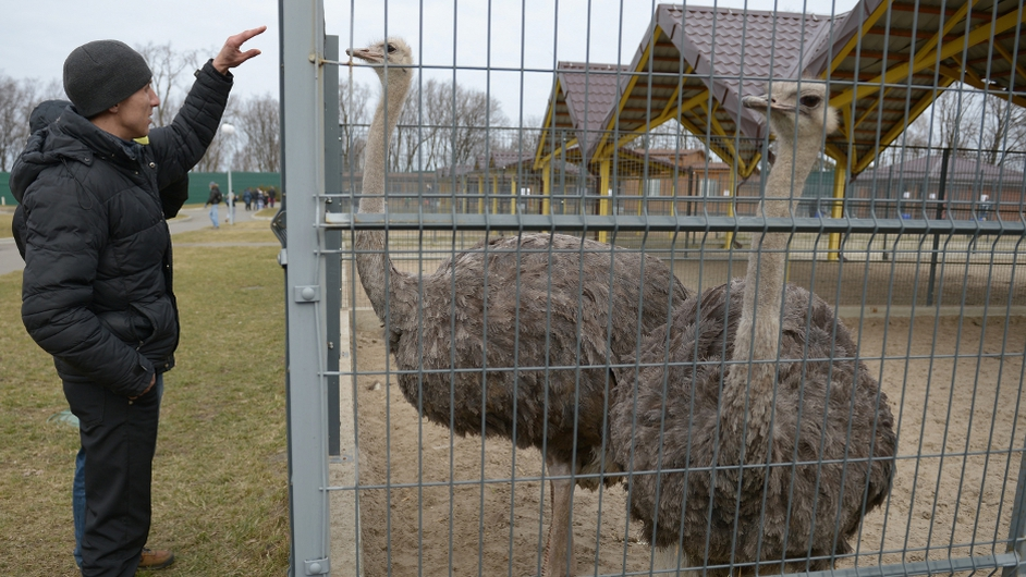 A man feeds an ostrich on the former president's estate, which was abandoned by security
