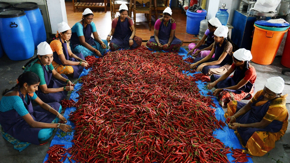 Indian women clean red chillies prior to preparing pickle at the women entrepreneur institution, Tejas Food Industries on the outskirts of Hyderabad