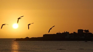 Blathnaid Healy's image shows birds in flight at sunrise in Sandycove, Co Dublin (Pic: @blathnaidhealy)