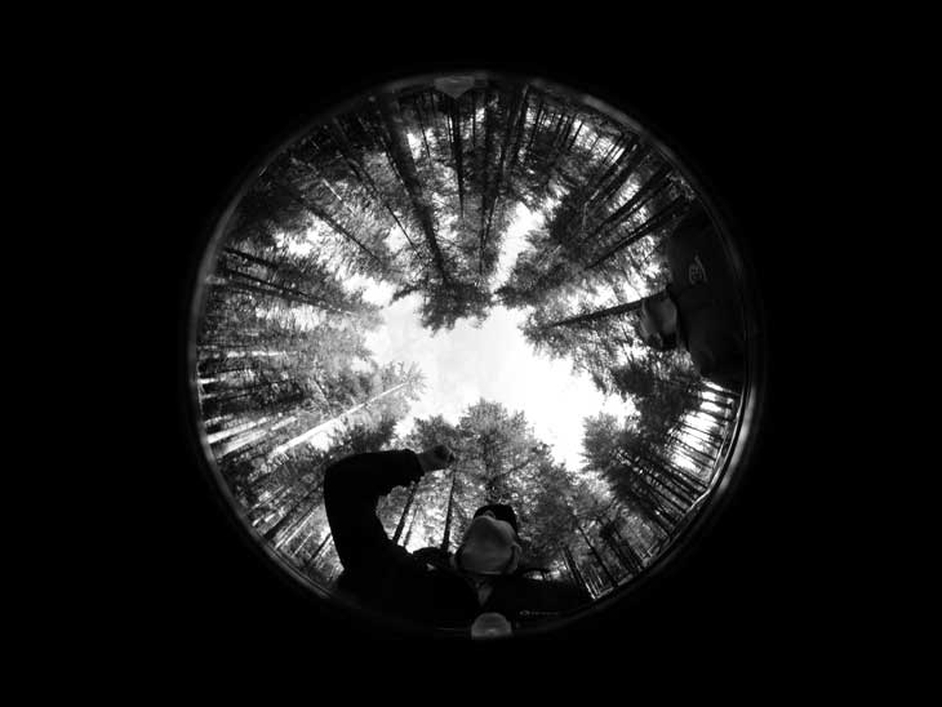 A mature Sitka spruce stand at Mount Callan, Co Clare, captured using a technique called hemispherical photography, also known as fisheye photography (Pic: Denis Coghlan)