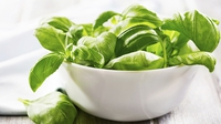 Basil Purée - Give your dishes that little bit more.
