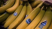 Chiquita again recommends shareholders back a tie-up with Fyffes