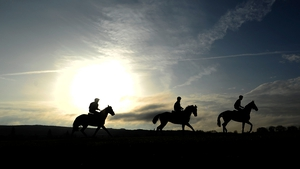 Horses enjoy their early morning preparations on the gallops at Cheltenham ahead of the four day racing festival