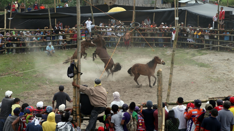 Villagers watch a horse fight during the Seslong festival on in T'boli town, Philippines. Horse fighting, which is illegal, pits two stallions against each other during mating season by forcing them to fight until retreat or death over a mare in heat