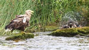 Bath time at Lough Derg
