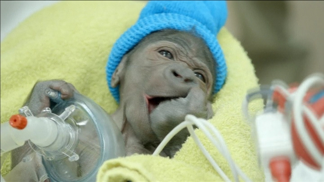 The baby girl was born weighing four pounds, six ounces