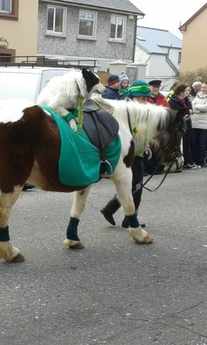 Catriona O'Connor took this photo of an unusual mode of transport in the Tralee parade