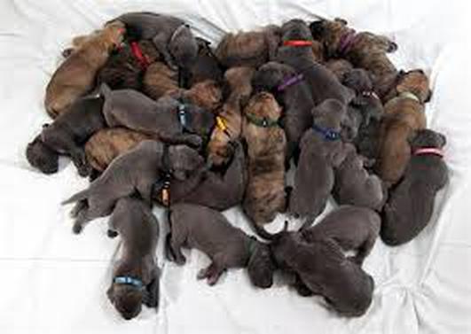 Puppy farms