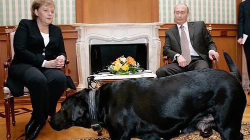 Russian President Vladimir Putin and German Chancellor Angela Merkel are watched by Mr Putin's dog Koni