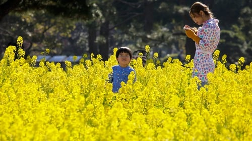 A boy takes a stroll in field mustard at a park in Tokyo, Japan (Pic: EPA)
