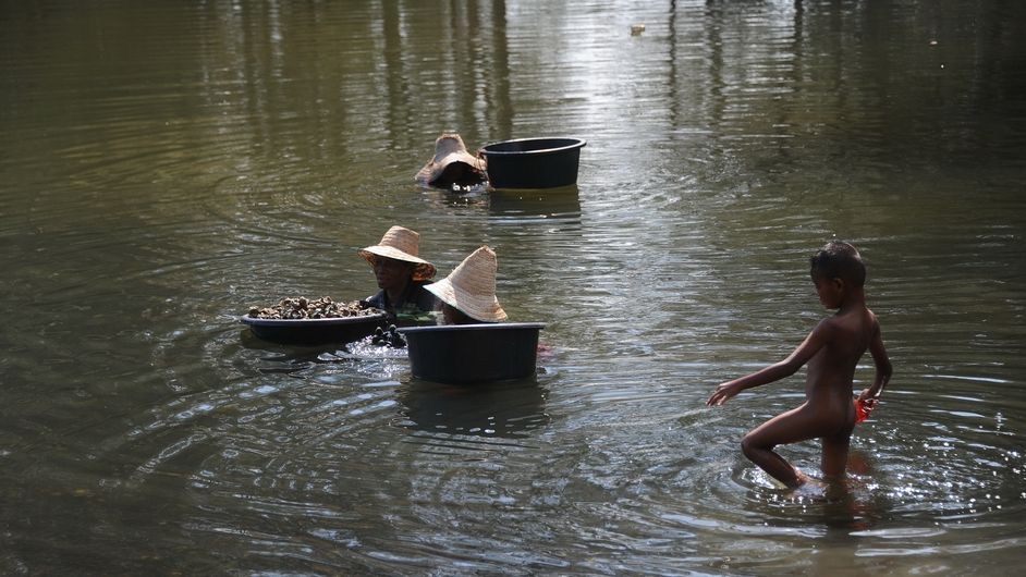 Thai women use buckets as they collect oysters in the Narathiwat river in Thailand's southern province of Narathiwat