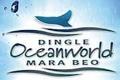 Penguins in love in Dingle