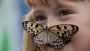 A butterfly sits on a girl's nose in the Natural History Museum's 'Sensational Butterflies' outdoor butterfly house in London
