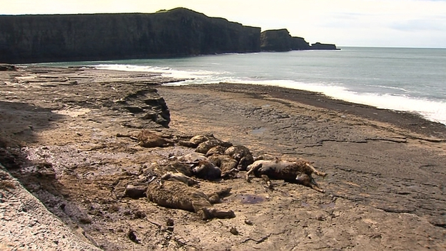 The carcasses were found at the foot of Baltard Cliffs