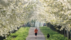A woman jogs between blossoming cherry blossom trees in Stuttgart, Germany (Pic: EPA)