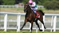 Kingman bidding for Curragh crown against 13