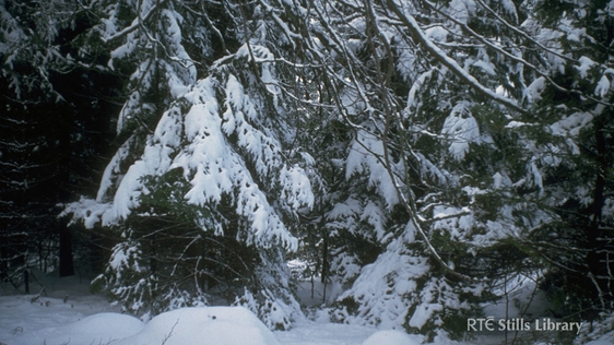 Snow-Covered Trees, 1982 © RTÉ Archives 0730/035