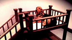 New dog bed launched by @TheDoggieLodge