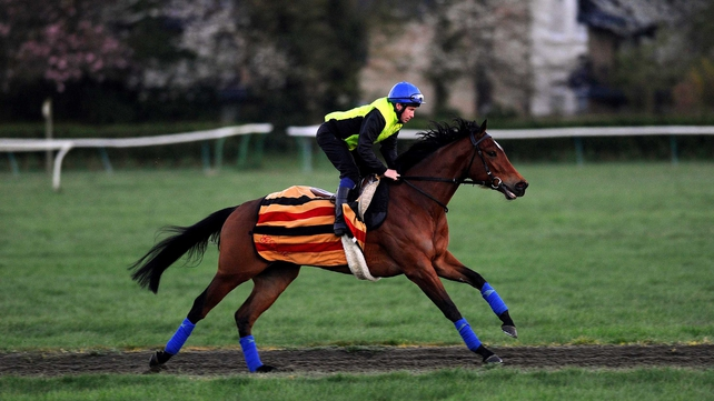 Ryan Powell works Lucky Kristale on the Long Hill Gallop in Newmarket