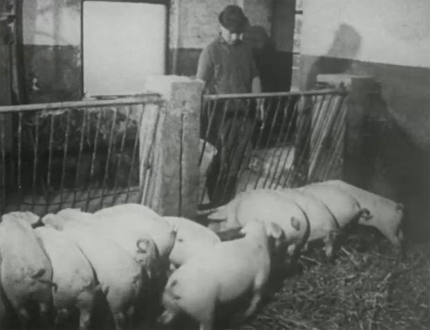 Farmer, 1969