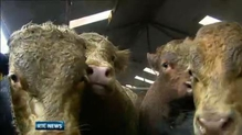 Major beef players attend meeting in Dublin on factory prices