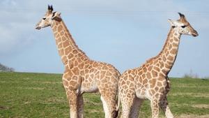 Fota Wildlife Park pick names for baby giraffes