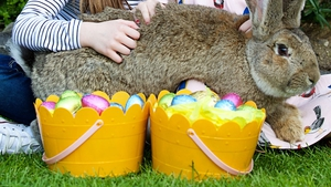 Among the events on offer are an Easter Treasure Trail, the Dublin Zoo Bunny Hop Dance and arts and crafts fun for younger visitors Photo: Patrick Bolger