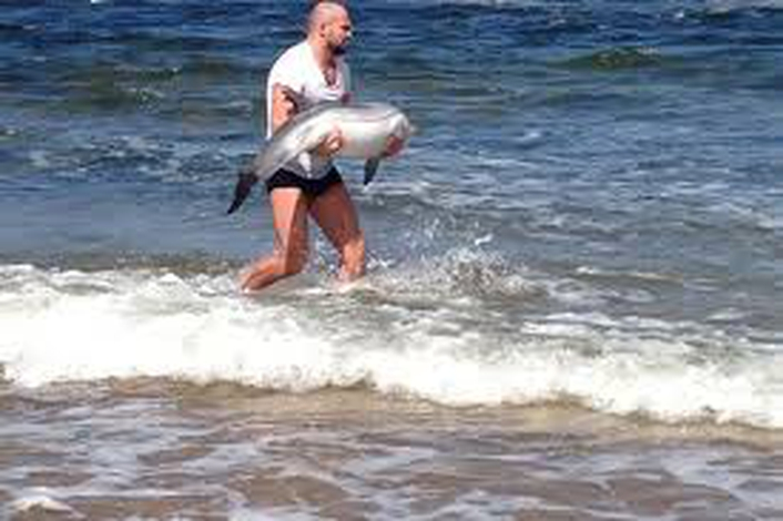 UFC fighter Cathal saves baby dophin