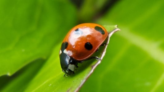 Ladybirds And Christmas Trees