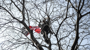 A supporter of Turkey's main opposition Republican People's Party (CHP) stands in a tree during an election rally at Kadikoy in Istanbul