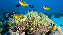 Australian scientists said last month just 7% of the Great Barrier Reef has been untouched by mass bleaching
