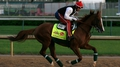 Sherman chasing Kentucky Derby glory