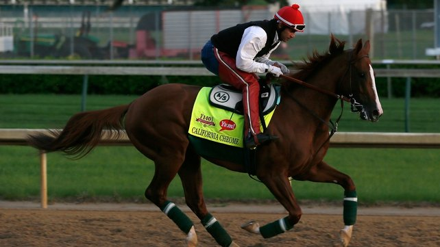 California Chrome during an early morning workout at Churchill Downs