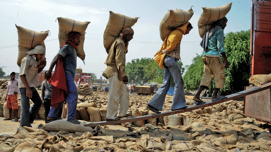 Indian labourers load 50kg sacks of wheat into a truck at a grain distribution point in Punjab