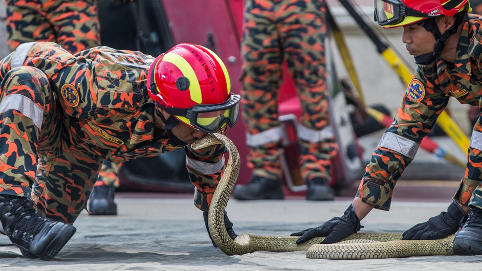 Malaysian firefighters display their skills in handling poisonous snakes during the International Firefighters' Day celebration in Kuala Lumpur, Malaysia
