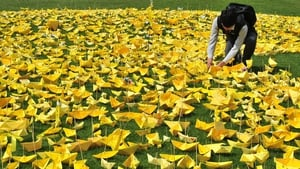 A South Korean student places a yellow paper ship into an arrangement forming the shape of a heart at a memorial for victims of the Sewol ferry disaster