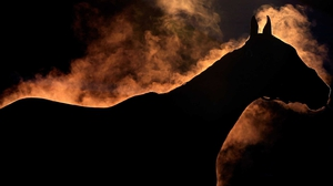 A horse gives off steam as it is bathed ahead of the Kentucky Derby at Churchill Downs