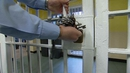 POA said that in many cases there is no penalty for prisoners who assault prison officers