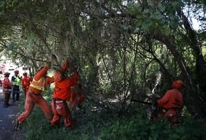 Californian fire crews pull down low hanging branches to help reduce the spread of fire in the event of a wildfire in Yountville, California.